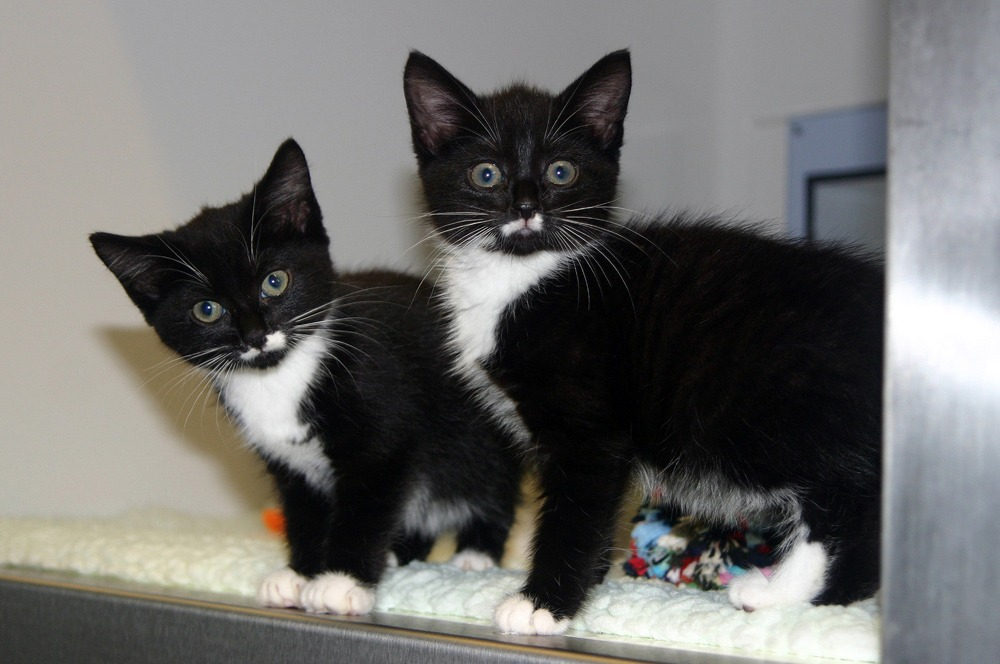 Cats Protection - rising shopper numbers and regular ...
