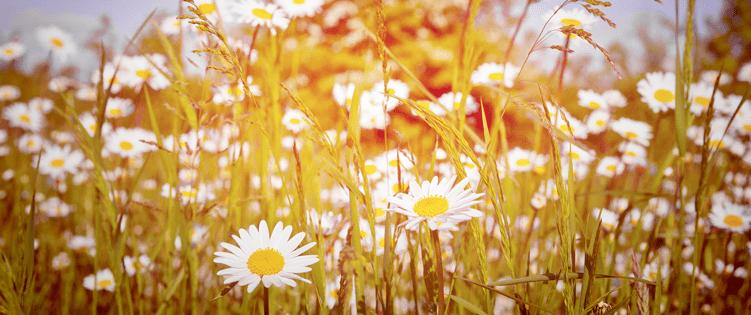 summer-spec