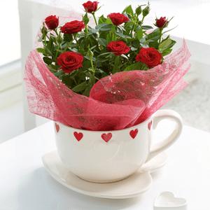 red_rose_teacup