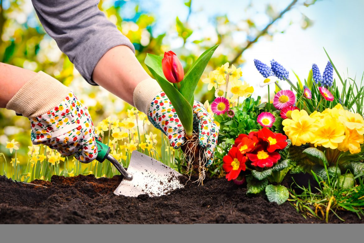 Image of someone planting flowers in a garden