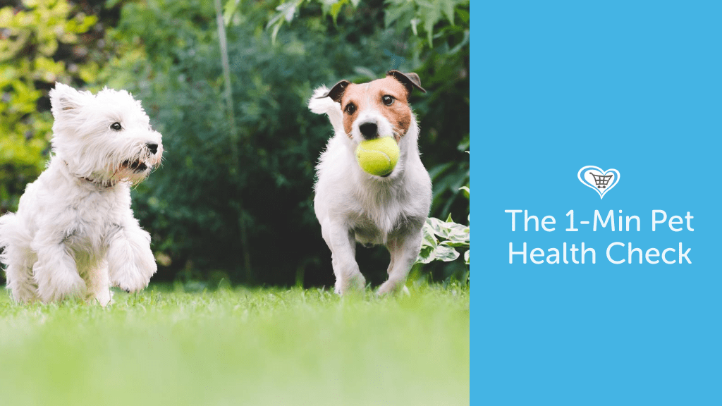 Keeping Your Pet Healthy