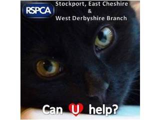 RSPCA Stockport