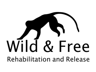 Wild & Free - Rehabilitation and Release