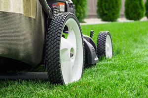 How to care for your lawn