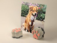 Concrete Paw Picture Holder Set of 2