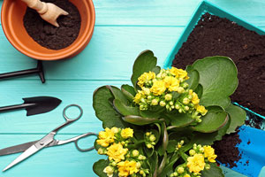 What to plant now for summer blooms