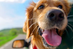 Which UK Holiday Destinations Are Dog-Friendly?