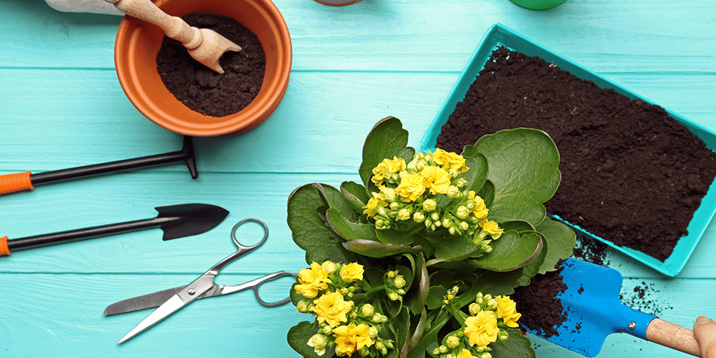 What to plant now for summer blooms🌼
