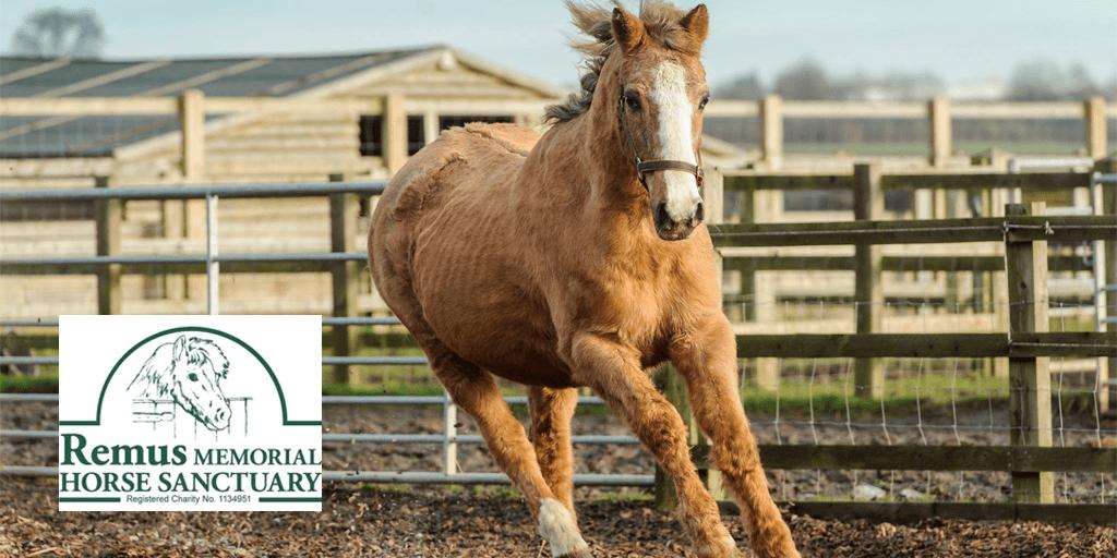 Case Study – Remus Memorial Horse Sanctuary