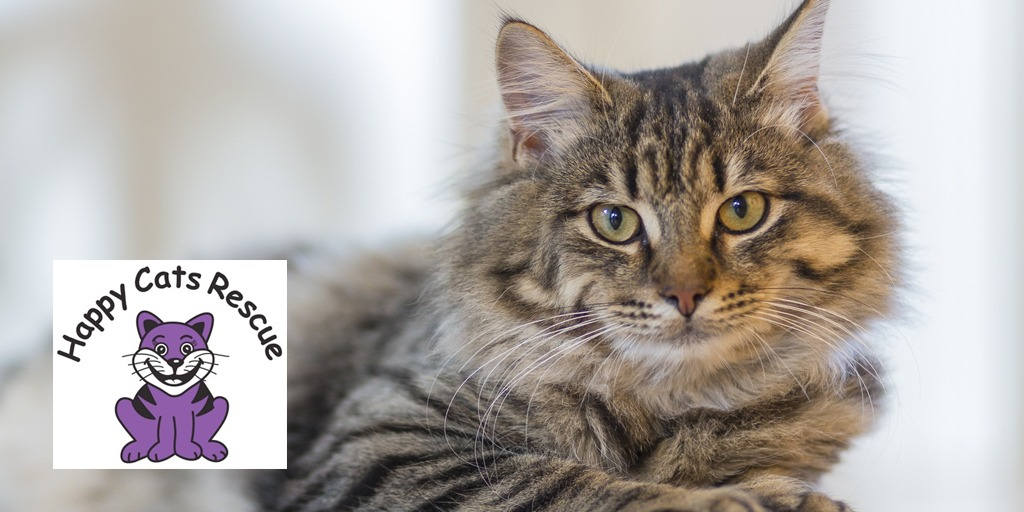 Our featured Charity – HappyCats Rescue
