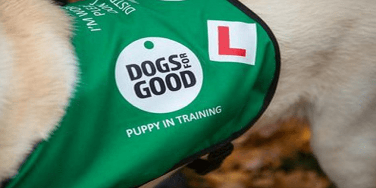 Our featured charity – Dogs for Good