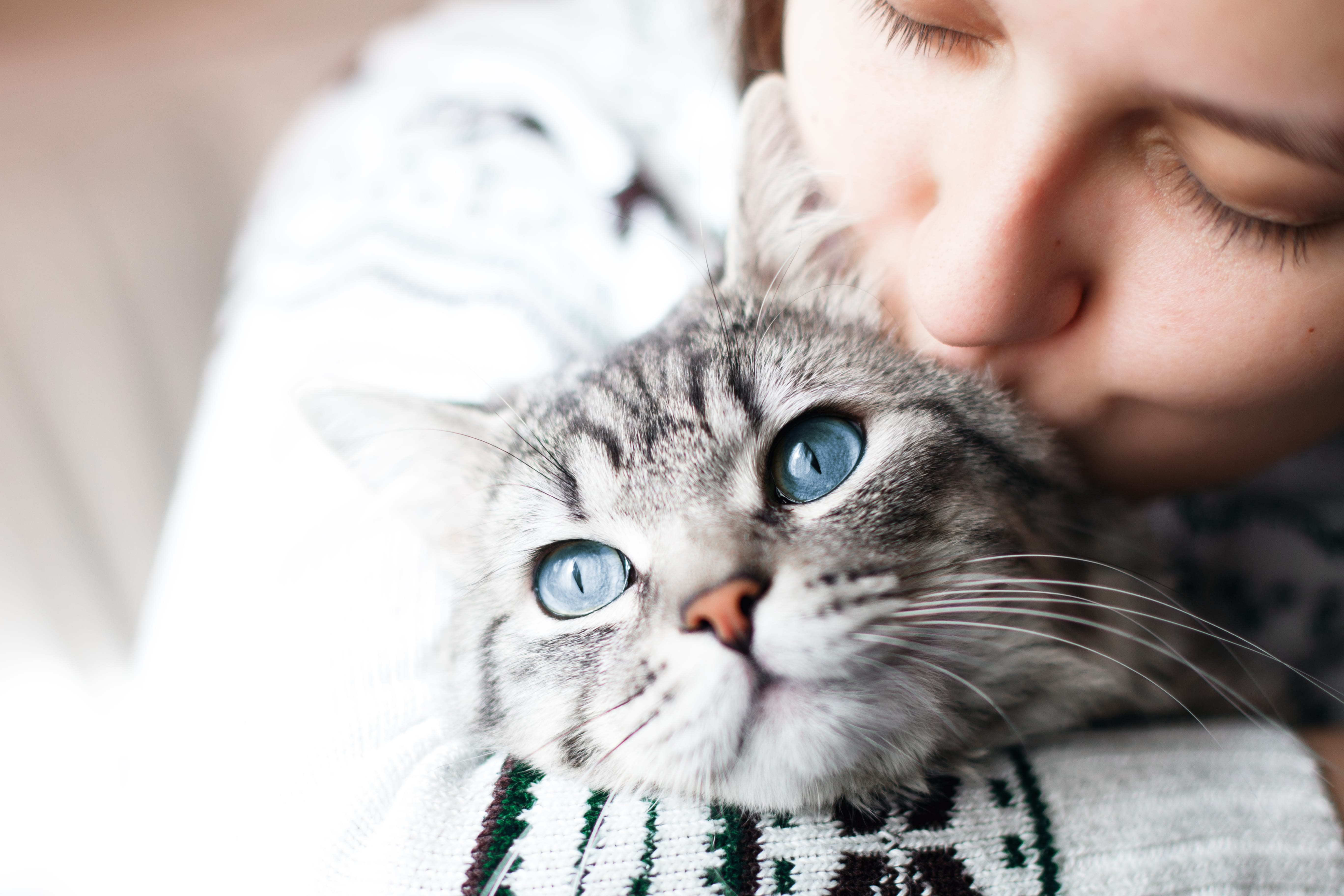 International Cat Day - Give as you Live Blog