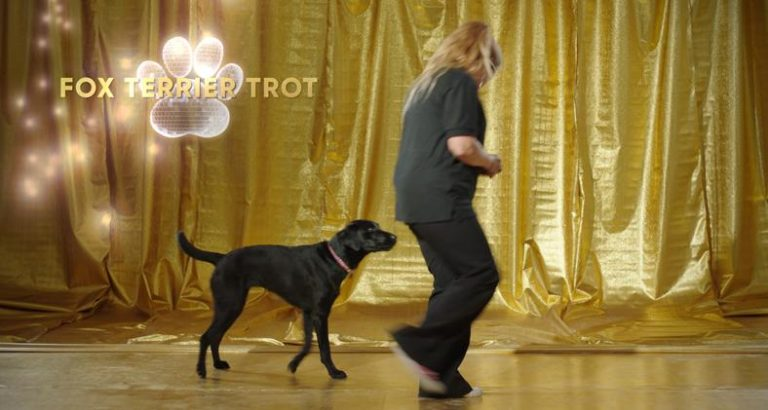 Learn the Fox Terrier Trot with Dogs Trust