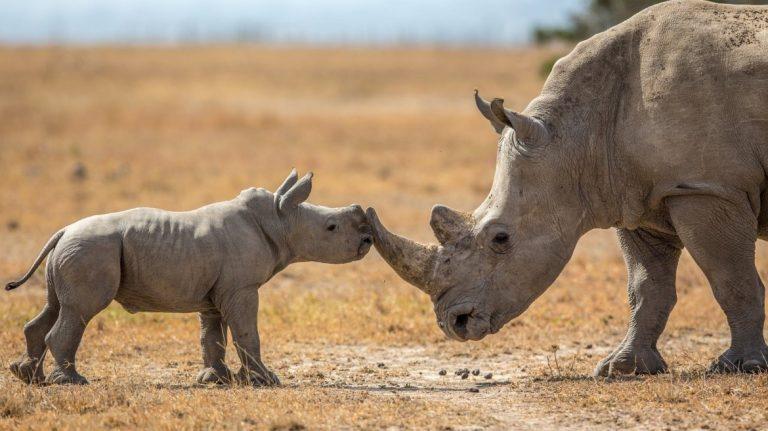 Help a Rhino this World Rhino Day!