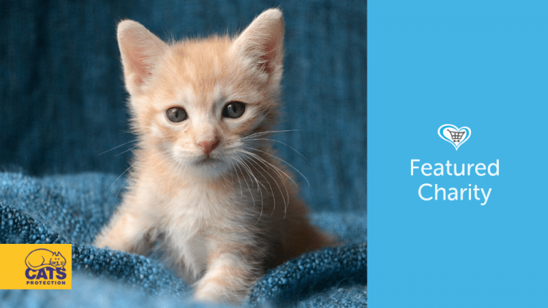 Cats Protection Become Featured Charity