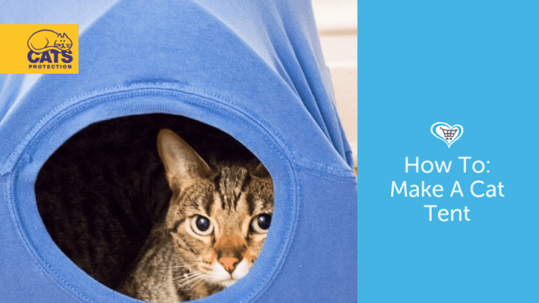 How To Make A Cat Tent!