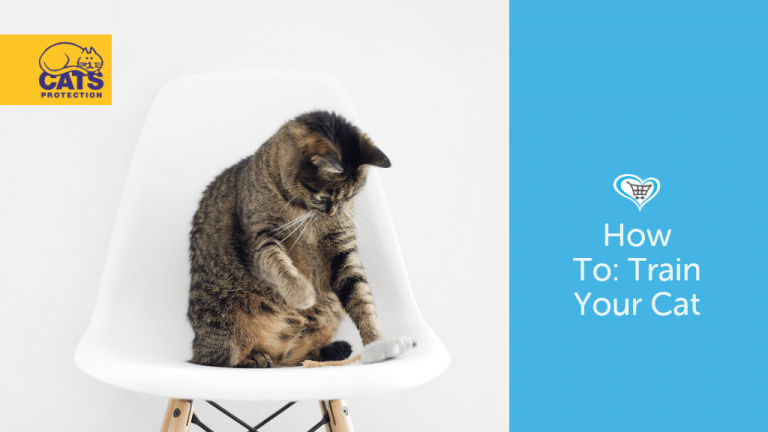 How To Train Your Cat To Sit, Roll Over and More!