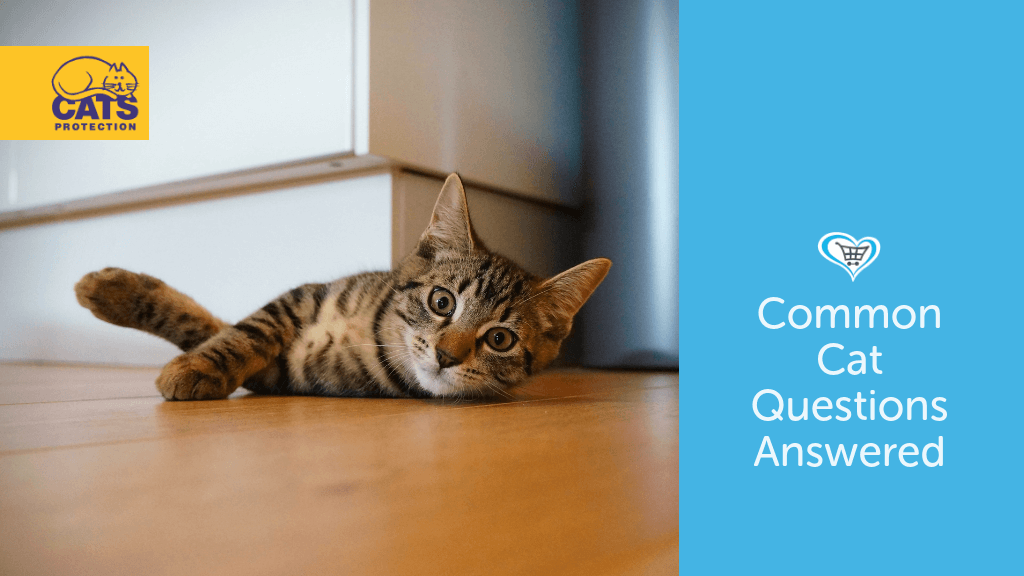 Common Cat Questions Answered